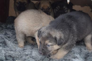 Срочно ищут дом или передержку щенки, фото 3
