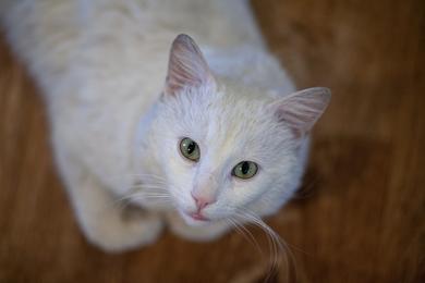 Найден белый кот, фото 3