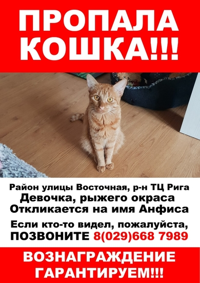 Потерялась кошка Анфиса