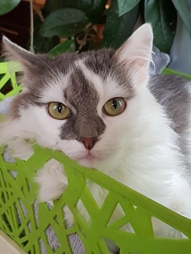 Настоящая Принцесса, пушистая кошка в добрые руки!
