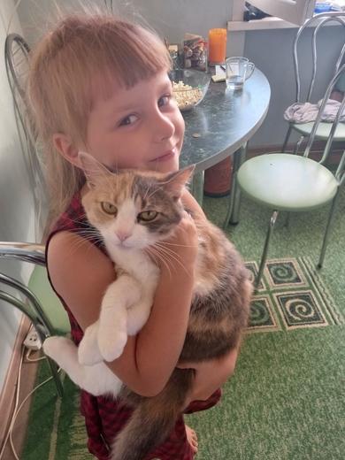 Трехцветная кошка Молли