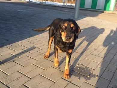 Чудо пёс Федя срочно ищет передержку или дом, фото 3