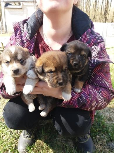 Срочно нужна передержка или дом щенкам, фото 4