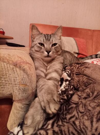 кот, фото 3
