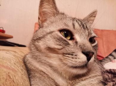 кот, фото 2