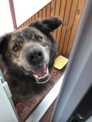 Найден пес с ошейником между Ратомкой и Тарасово