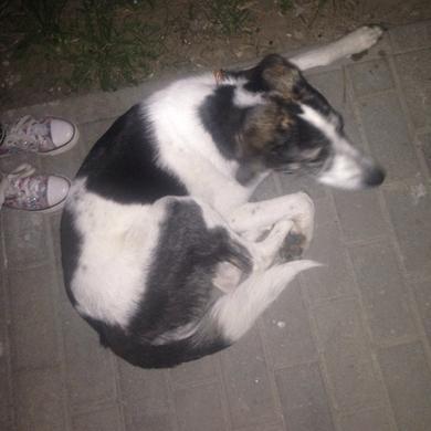 Потерялся пес