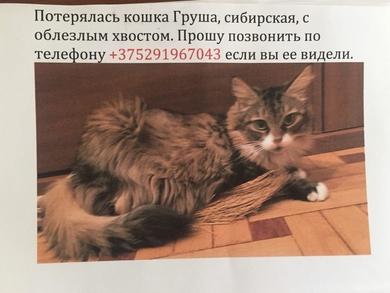 Пропала кошка Фрунзенский р-н, по ул. Притыцого,39