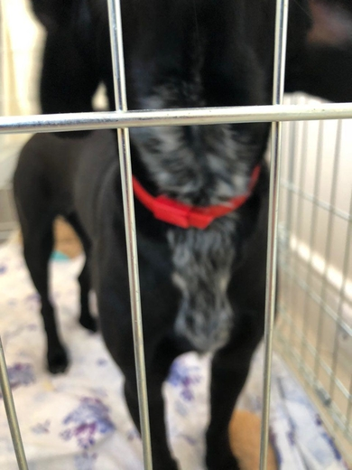 Найдена молодая чёрная собака, фото 4