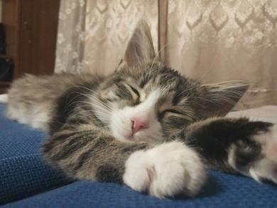 Пропала кошка (котенок 6 месяцев)
