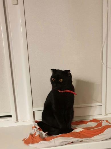 Найдет черный кот