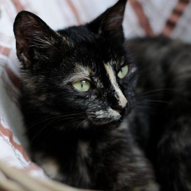 Кошка 5-6 месяцев. Найдена в районе м. Уручье.