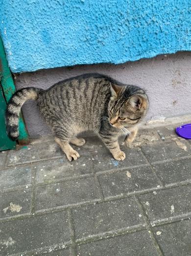 найден кот на лобанка, 14 (минск)