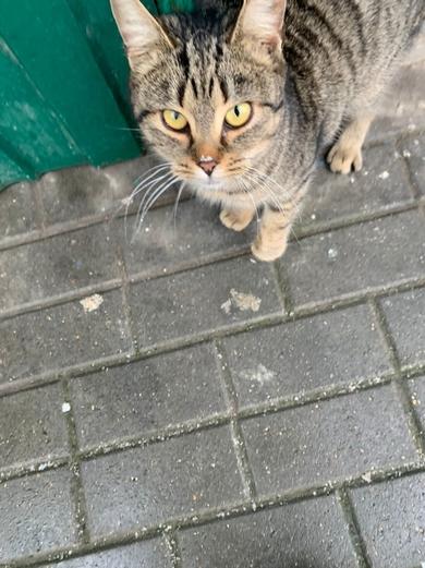 найден кот на лобанка, 14 (минск), фото 2