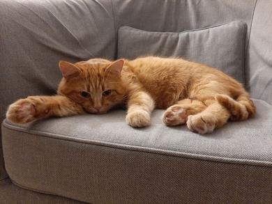 Сеница / потерялся рыжий кот Рысик