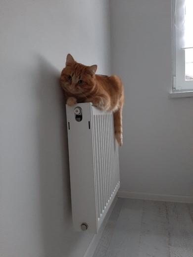 Сеница / потерялся рыжий кот Рысик, фото 2