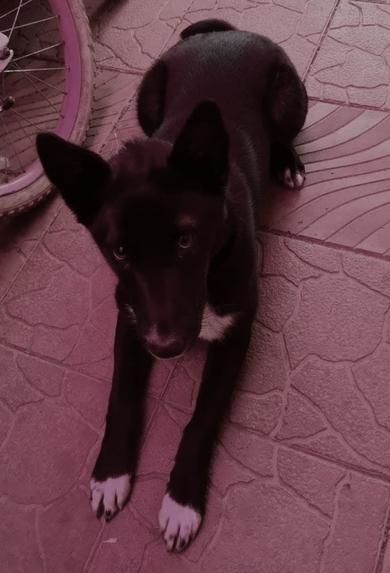Найден щенок в Заславле