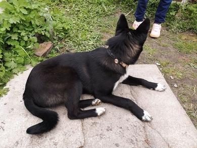 Найден щенок в Заславле, фото 2