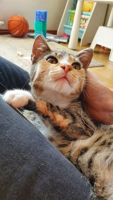 Кошечка Шуша ищет любящих хозяев, фото 2