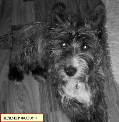 Внимание!!!! замечена собака, фото 2