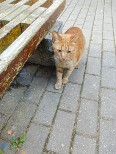 Замечен рыжий кот, похоже, что потерялся., фото 2
