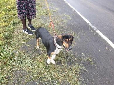 Найдена собака в Колодищах, фото 3