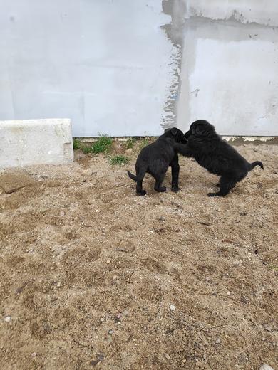 Красивые щенки в дар, фото 3