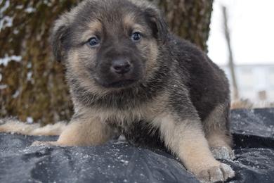 Срочно ищут дом или передержку щенки, фото 4