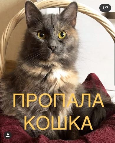 Минск, район улицы Жудро (ст.м. Спортивная), пропала кошка по кличке Мира.