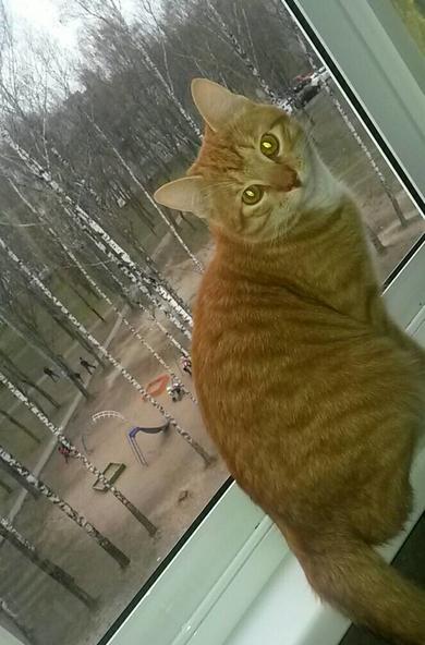 Потерялся рыжий котик на Уборевича