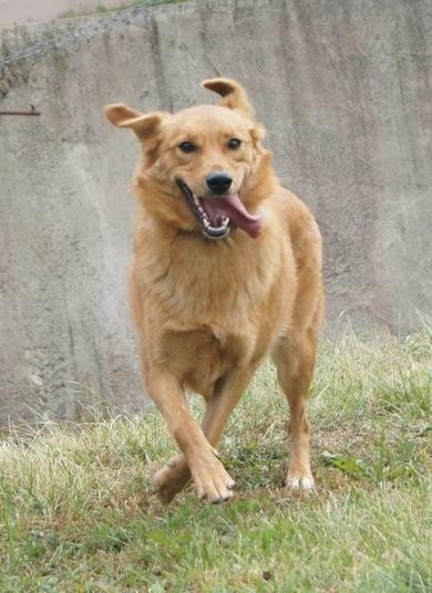Молоденькая, стерилизованна собака ищет свою семью, фото 2