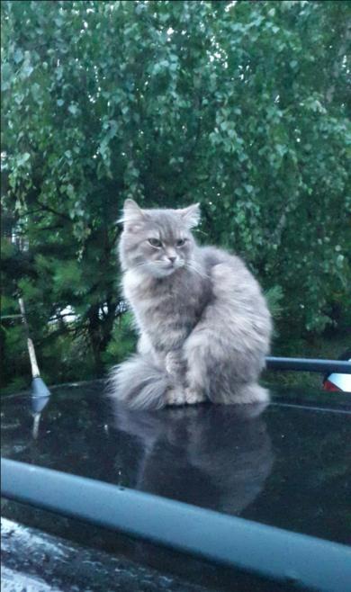Чей котик?