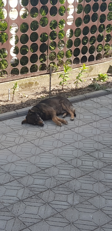 Потерялся пес, фото 2