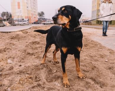 Очень срочно собаке нужна передержка или дом собаке