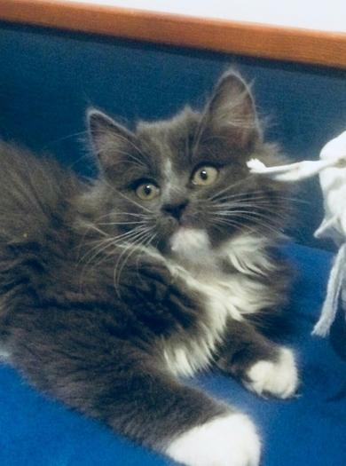 Очень красивый котенок в дар, фото 4