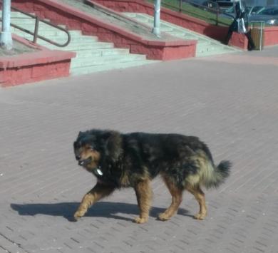 ЗАМЕЧЕНА собака с ошейником