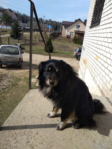 найдена собака в районе Стайки, Ельница, фото 2
