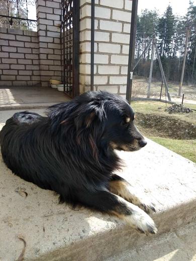 найдена собака в районе Стайки, Ельница
