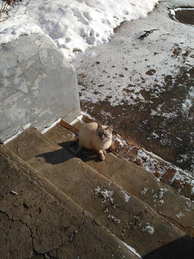 Найден кот. Минск!, фото 2