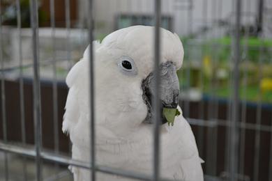 Краски лета в мире больших попугаев и певчих птиц