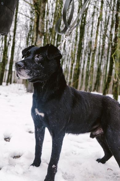 SOS. САМЫЙ прекрасный, САМЫЙ красивый пес ждет ЛУЧШЕГО ХОЗЯИНА!