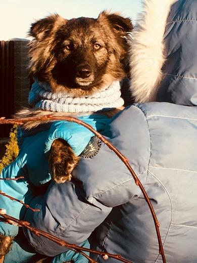 Красивая собака в дар, фото 3