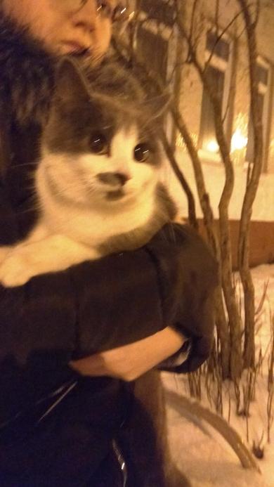 нашли кошку, фото 2