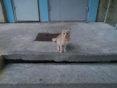 Найден молодой рыжий кот, фото 2