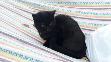 пропала кошечка 6-7 месяцев. черная, фото 2