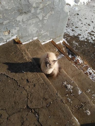 Найден кот. Минск!