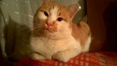 Найден кот, фото 2