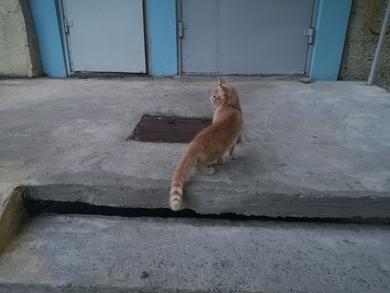 Найден молодой рыжий кот, фото 3