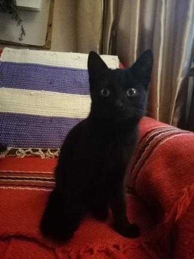 найдена маленькая кошка