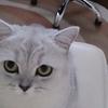 Аватар пользователя kmaretskaya